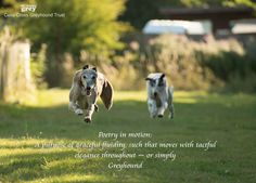 Poetry in Motion!