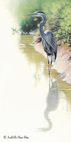 The Nature and Animal Art of Judith Hartke