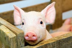 One ag-gag bill is dead in California, another is approved in Tennessee