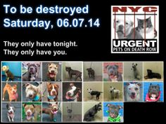 TO BE DESTROYED: 22 Dogs to be killed! SHAME ON YOU NYC ACC -these dogs ARE worth saving!!! - SAT 6/7/14 -This is a HIGH KILL SHELTER. Many GOOD DOGS euthanized every day! Young, healthy, friendly dogs, mamas, & puppies. POOR LIVING CONDITIONS & CARE. Please help any way you can. See link if interested - read carefully: docs.google.com/...