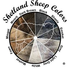 The primary natural colors of Shetland sheep Spinning Yarn, Hand Spinning, Fair Isle Knitting, Knitting Yarn, Sheep Breeds, Animal Fibres, Sheep Farm, Shetland Wool, Collor