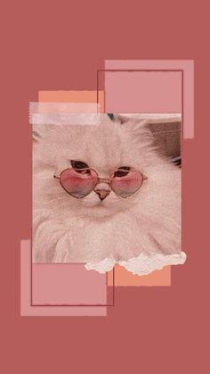 #cat #aesthetic #aestheticwallpapers #catwallpaper