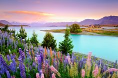 Church of the Good Shepherd and Lake Tekapo, NZ - I've been here but in the heart of winter, and this shot...wow.