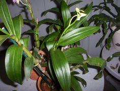 care instructions for aloe vera plant