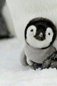 23 Incredibly Cute Baby Animals That Will Melt Your Heart