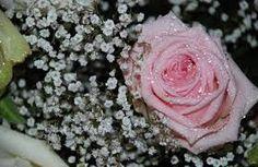 Resultado de imagen para rosas verdes grandes y hermosas