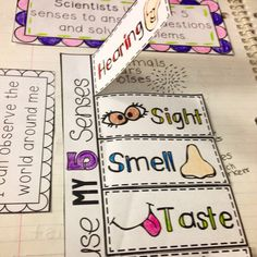 The Five Senses Interactive Science Notebook