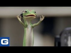 The Gecko cheers during his first NCAA Basketball Game - GEICO Insurance - YouTube Employee Insurance, Geico Car Insurance, Don Lafontaine, March Madness Tournament, Impacted Ear Wax, Benjamin Graham, Cute Gecko, Investment Firms, Military Personnel