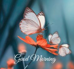 Beautiful Morning Pictures, Good Morning Images Flowers, Good Morning Picture, Good Morning Greetings, Good Morning Wishes, Morning Quotes In English, Best Nature Images, Good Day Quotes, Good Morning Wallpaper