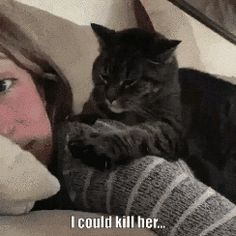 Trendy Ideas for cats funny cute hilarious kittens Cute Funny Animals, Funny Animal Pictures, Funny Cute, Cute Cats, Super Funny, Funny Animal Gifs, Crazy Cat Lady, Crazy Cats, Cats Humor