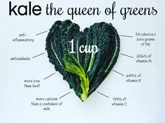 . . . . Kale is one spectacular veggie!  It has some fantastic health benefits that make it one of the healthiest vegetables around. Enjoy it in smoothies juices stir-fries soups and more! Vegans and vegetarians can especially benefit from kale since it is an excellent source of both iron and calcium  . . . . .  #love #life #nature #health #healthy #paleo #primal #landscape #earth #pretty #amazing #gorgeous #food #natural #beautiful #fantastic #fitness #weightloss #fatloss #lovelife #behappy…