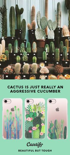 """""""Cactus is just really an Aggressive Cucumber."""" 