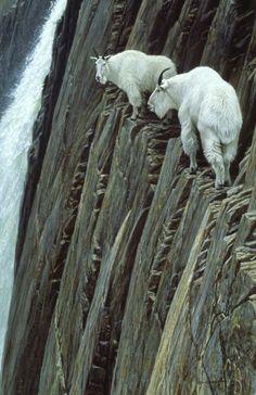Mountain Goats on the edge Polar Bear, Cats, Animals, Gatos, Animales, Animaux, Cat, Animal, Kitty