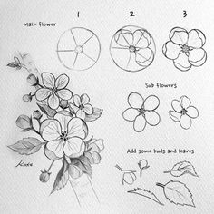 Easy Flower Drawings, Flower Art Drawing, Flower Drawing Tutorials, Flower Sketches, Floral Drawing, Pencil Art Drawings, Art Drawings Sketches, Easy Drawings, Easy Nature Drawings