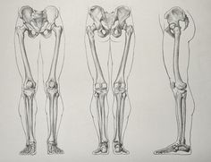 Leg-Bones-16-5-by-Drawing-Academy.jpg (762×586)