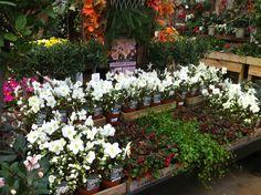 The BEST Garden Center I Have Ever Seen!!! | OMAHA, NEBRASKA ~ THE GOOD  LIFE | Pinterest
