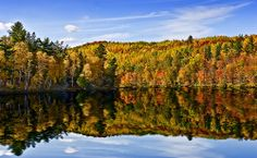 The 11 best places to see fall foliage! (this is of Tahquamenon Falls, Michigan)