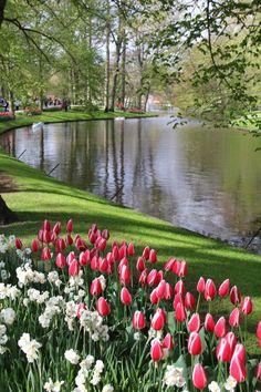Un parc floral hors du commun - Avis de voyageurs sur Keukenhof, Lisse - TripAdvisor