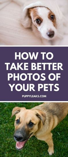 How to take better photos of your pets. Do you struggle when it comes to taking good pictures of your pets? From choosing the right angle to keeping the background simple, here's 10 tips to help you take better photos of your dog. Cute Dog Pictures, Dog Photos, Take Better Photos, How To Take Photos, Training Your Dog, Training Tips, Diy Pet, Life Hacks, Dog Care Tips