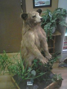 1000+ images about Bad Taxidermy on Pinterest | Coyotes ...