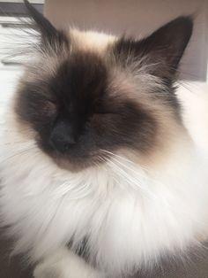 Vår katt Felix