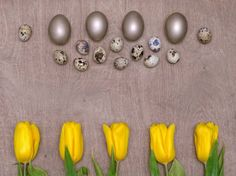 easter background with silver eggs and yellow tulips over wood