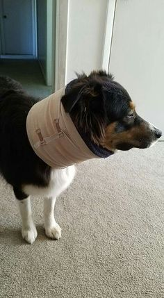 Diy e collar alternatives wear a t shirt on the bottom to protect homemade cone alternative the cone was banging against the wall and catching on things solutioingenieria