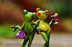 Free Image on Pixabay - Frogs, Party, Cocktail, Cute, Funny Frog Pictures, Cute Frogs, Cross Paintings, Paint Set, Cute Funny Animals, Love Photos, Amphibians, Pet Care, Tree Frogs