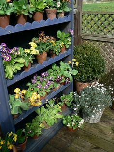 Primula Auricula, Potting Tables, Primroses, Theatres, Potted Plants, Gardens, Display, Spring, Diy