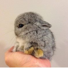 Cute little bunny  Photo by @bom_rabbits