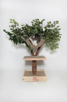 A norte-americana Pet Tree Houses (www.pettreehouses.com) não realiza entregas no Brasil, mas alguns de seus produtos podem servir de inspiração para os adeptos do faça você mesmo. Um exemplo é a árvore com degraus em madeira e folhagem artificial