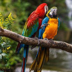 "Mug shot for Craig Buckner and his macaw, ""Bird. – A macaw named ""Bird"" is an instant Pretty Birds, Love Birds, Beautiful Birds, Animals Beautiful, Tropical Birds, Exotic Birds, Colorful Birds, Animals Of The World, Animals And Pets"