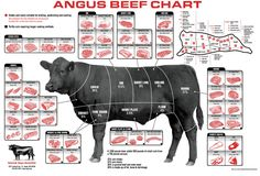 Beef cattle diagram and different cuts of meat.                                                                                                                                                                                 More