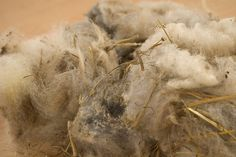 Raw fleece and how to process it.  Yes, wool is pretty disgusting, smelly, greasy, dirty and poopy straight off the sheep.  It's a chore to process, but SO well worth it!