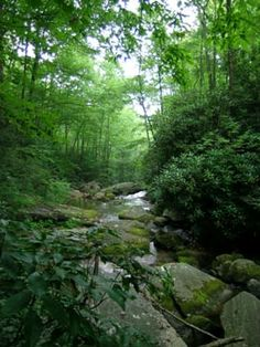 Appalacian Forests