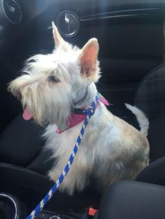 Luna viajando en coche