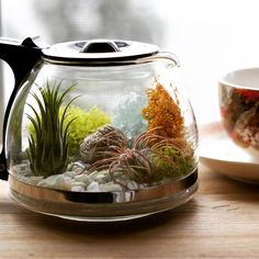 It's Plants and Coffee day on the blog today! Come on over and learn to make this air plant coffee pot terrarium. So take a coffee break and head on over (link in profile). Also check out other coffee and plant pairings by other #urbanjunglebloggers