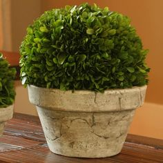 Preserved Boxwood Topiary.