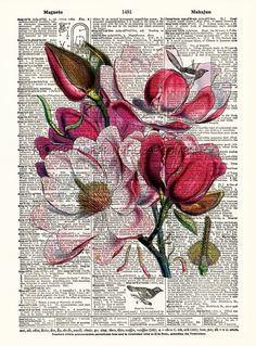 Magnolia, flower dictionary print, vintage botanical illustration, printed on an antique dictionary page. I love this composition of prose and art. Botanical Drawings, Botanical Illustration, Book Page Art, Book Art, Arte Peculiar, Newspaper Art, Vintage Flower Prints, Dictionary Art, Painted Books