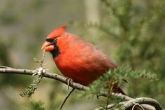 The Ohio Nature Blog: Photographing Birds at the Columbus Zoo
