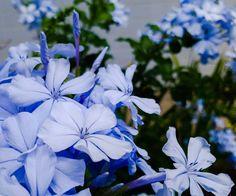 Eu cansei desse meu coração sem graça Então esta noite vou arrancá-lo e recomeçar Pois gostaria de deixar minhas questões definidas É sempre mais escuro antes do amanhecer  Shake it out - Florence and The Machine  #flowers #flores #lilás #nature #natureza #lovely