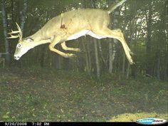 Trail Camer Photo- Whitetail Run