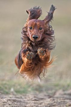 Mid Air    Mid air / dogs / Photo by Pieter Langenhuysen