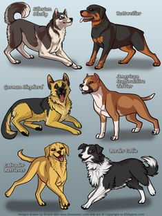 This one now only features dogs from BSK. Dog Breeds List, Cute Dogs Breeds, Cute Animal Drawings, Animal Sketches, Dog Pictures, Animal Pictures, Dog Emotions, Dog Paintings, Cat Drawing