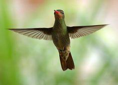 Tus alas pueden ser una pesada carga que no comprendes, o pueden ayudarte a volar. Todo depende de tí. LEE EL PENSAMIENTO COMPLETO EN: http://cpm.com.es/aprende-a-usar-tus-alas/