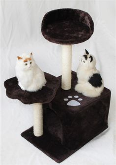 Vedem Cat Kitten Play Toy Scratcher Furniture Post Scratching Tree Board Bed House @ You could get additional details at the image link. (This is an affiliate link and I receive a commission for the sales) Kittens Playing, Cats And Kittens, Pet Cats, Pets, Cat Training Pads, Cat Id Tags, Cat Shedding, Cat Scratching Post, Cat Fleas