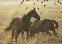soaringfromthesaddle:  Horses by ~hofhauser