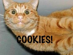 Me when my parents come back with cookies