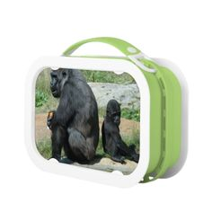 Shop Mountain Gorillas Lunch Box created by WildlifeAnimals. Lunch Table, Lunch Boxes, Gorilla Funny, Baby Monkey Pet, Silverback Gorilla, Mountain Gorilla, Primates, Pet Gifts, Pets
