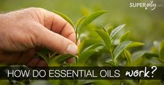 With so many amazing stories about essential oils floating around these big ole' interwebs, it's easy to think that they are nothing more than